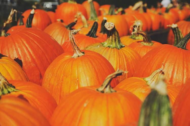 Halloween Pumpkin Carving Kit and tools
